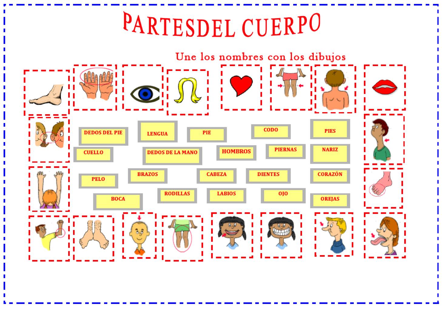 partes del cuerpo | Español para inmigrantes y refugiados